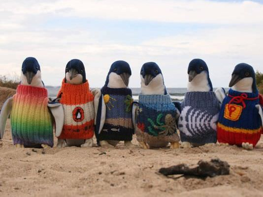 Penguin_sweaters_Australia_knit_old_man