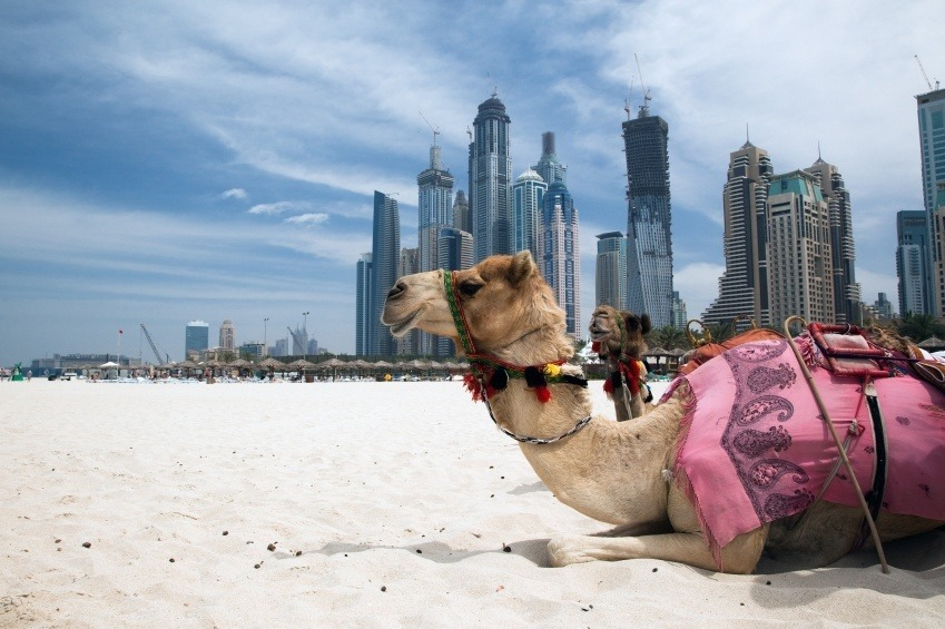 camel_where_to_go_in_the_UAE
