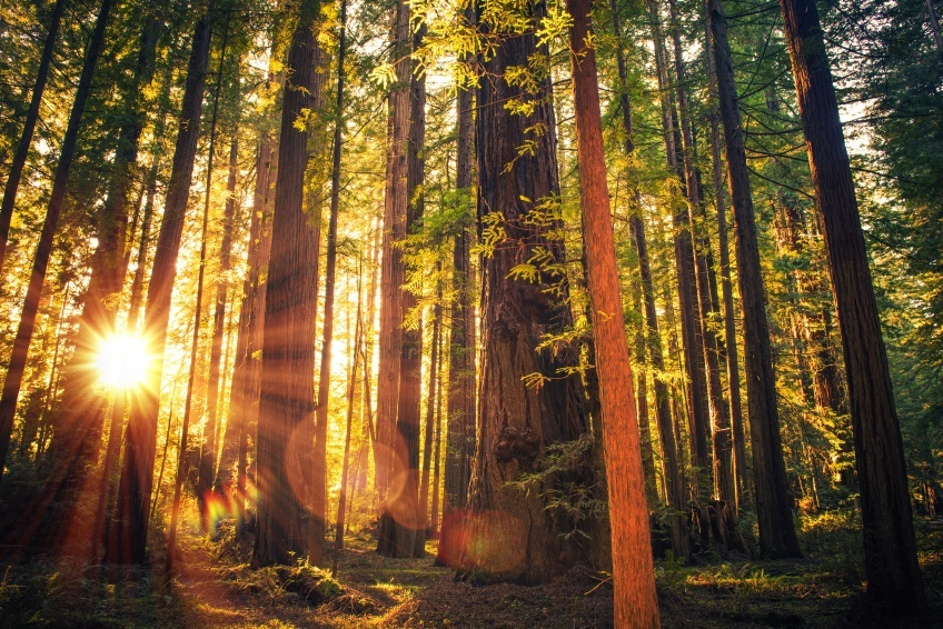 redwood_where_to_go_in_the_pacific_states