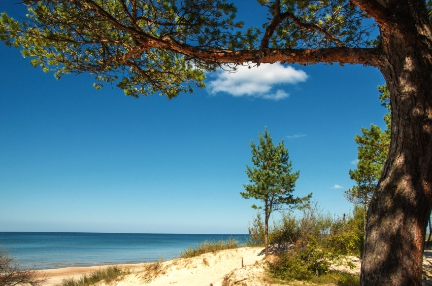 spit sand beach curonian lithuania tree water warm