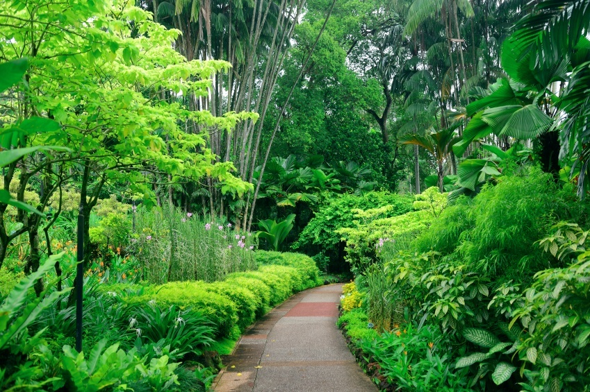 botanic gardens singapore plants humid forest
