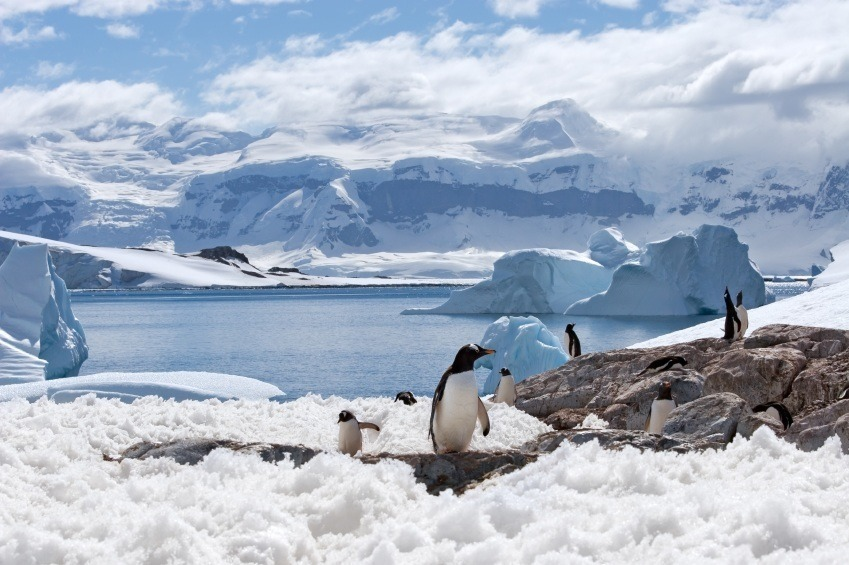 antarctica ice penguins snow iceberg cold