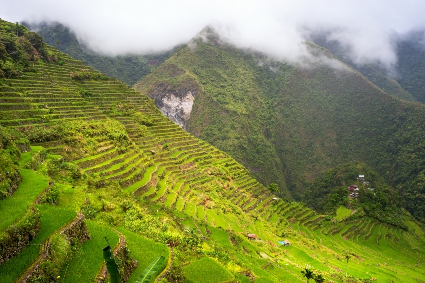 rice fields philippines mist mountains