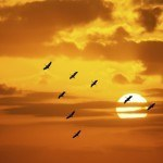 winter destinations for canadians birds migrating sunset