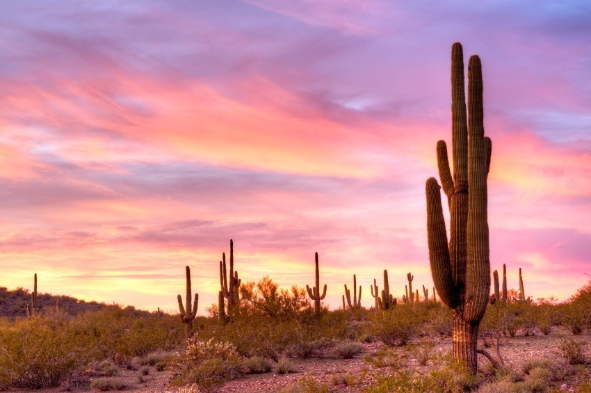 arizona sonoran desert caucus sunset