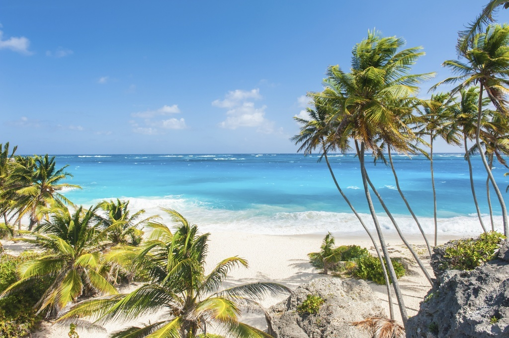 barbados beach palm trees sand sunny ocean