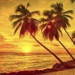 visit barbados sunset palm trees beach sea caribbean