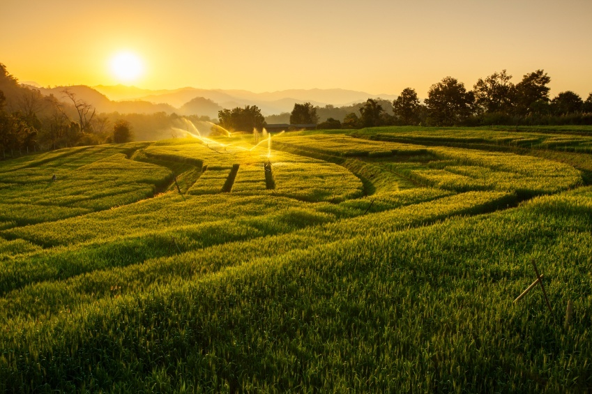 farm barley thailand sunset rural countryside