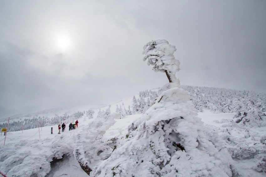 yamagata japan snow ski gassan tree people hiking