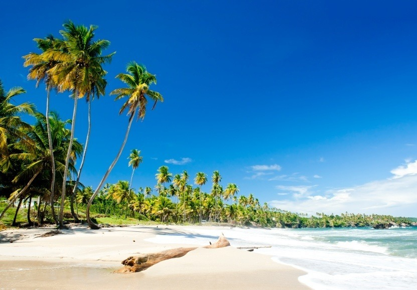 trinidad coast beach palm trees sun white sand