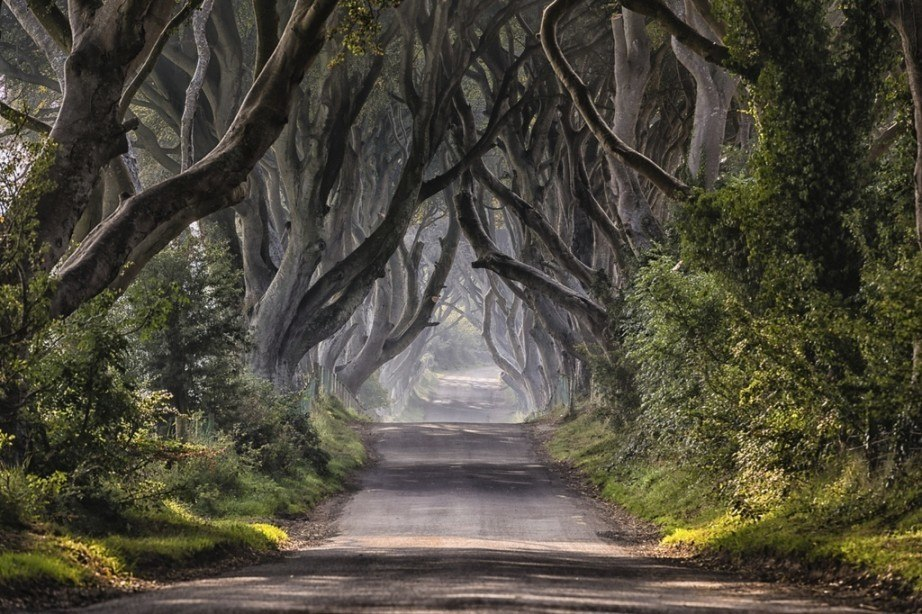game of thrones trees path northern ireland