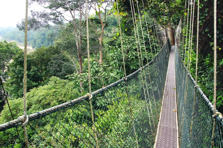 taman negara rainforest malaysia tropical canopy suspension bridge