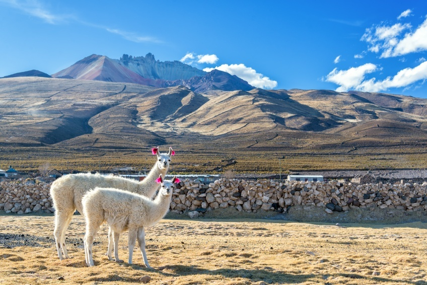 llamas mountains bolivia landscape altitude alpine