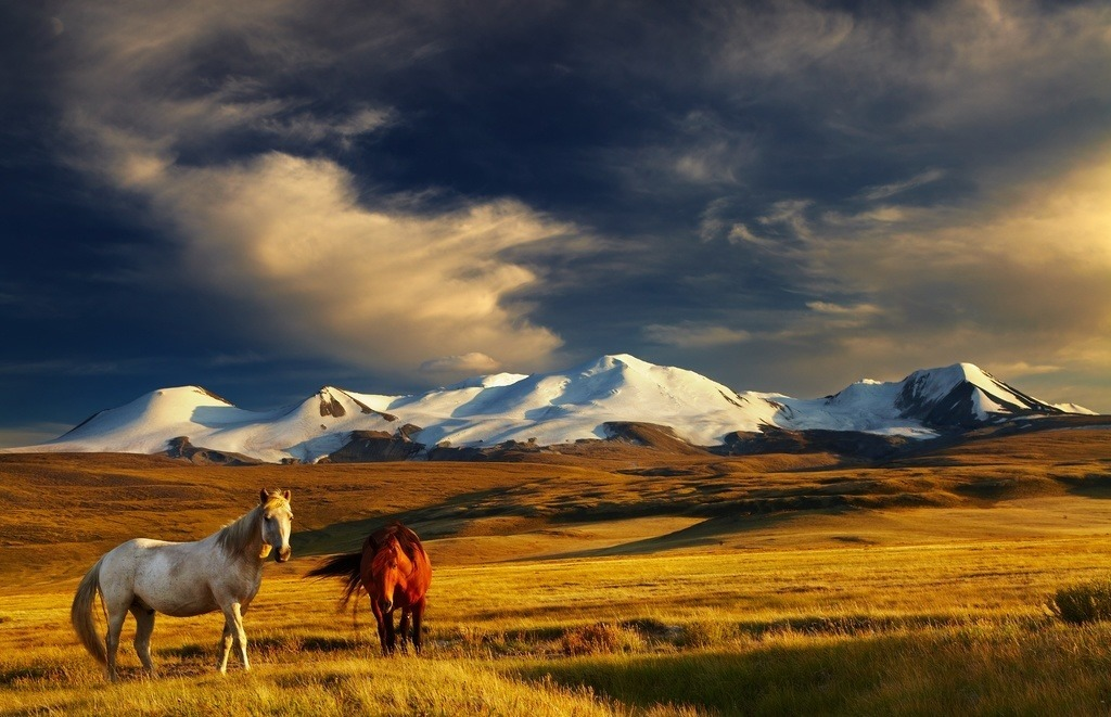 mongolia mountains horses landscape steppe barren