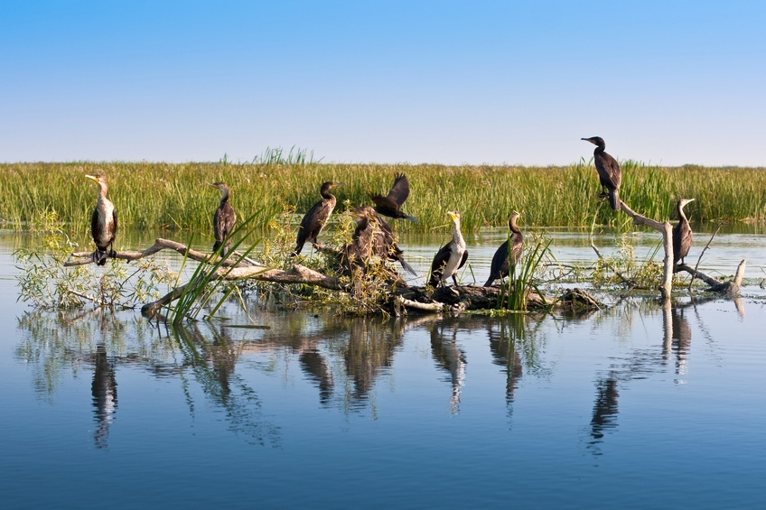 danube delta romania birds tree wetland marsh