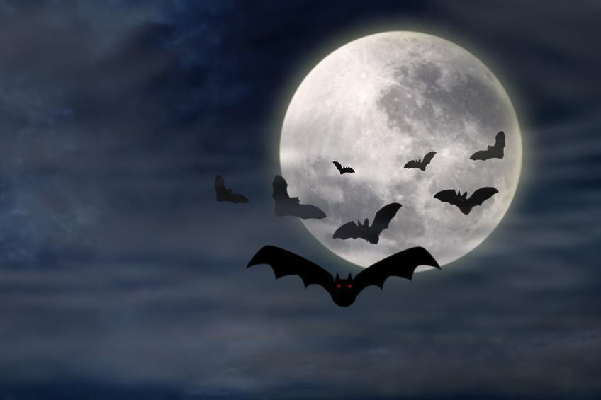vampire bats moon flying