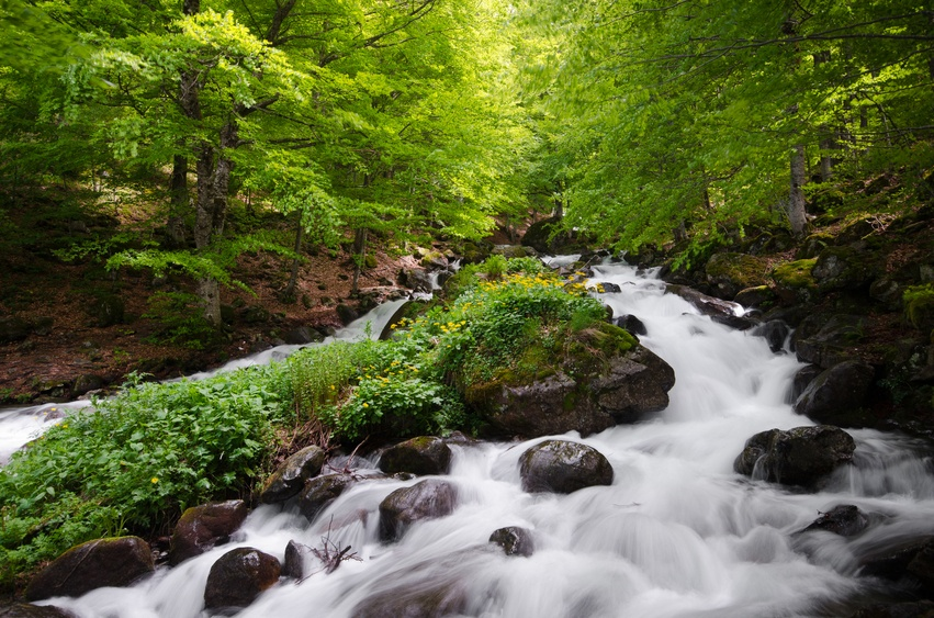 kosovo stream forest nature balkans