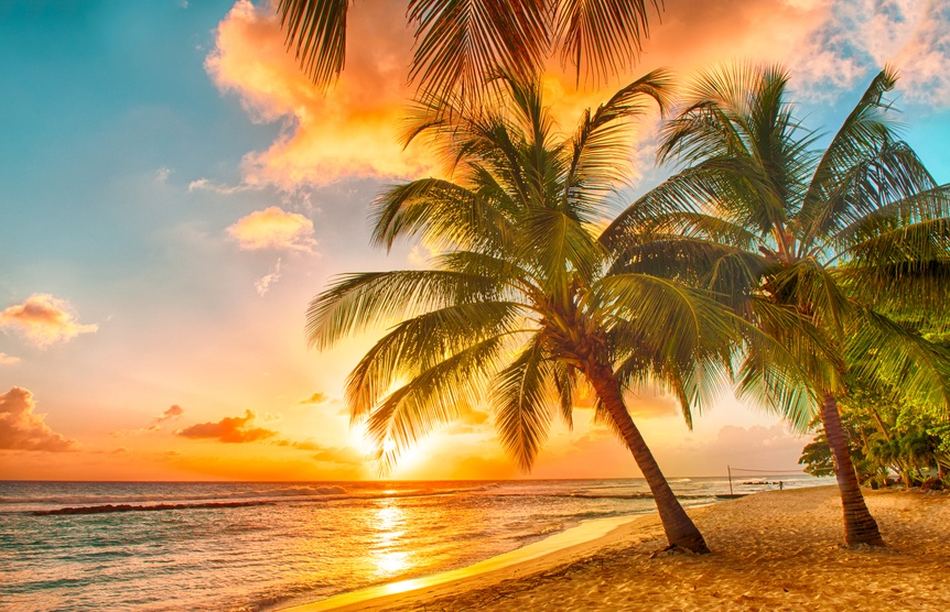 barbados beach palm tree caribbean sunset ocean