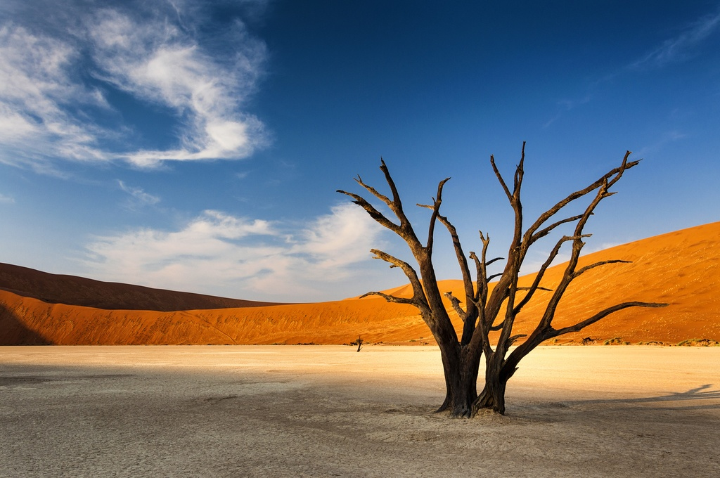 namibia tourism desert tree barren