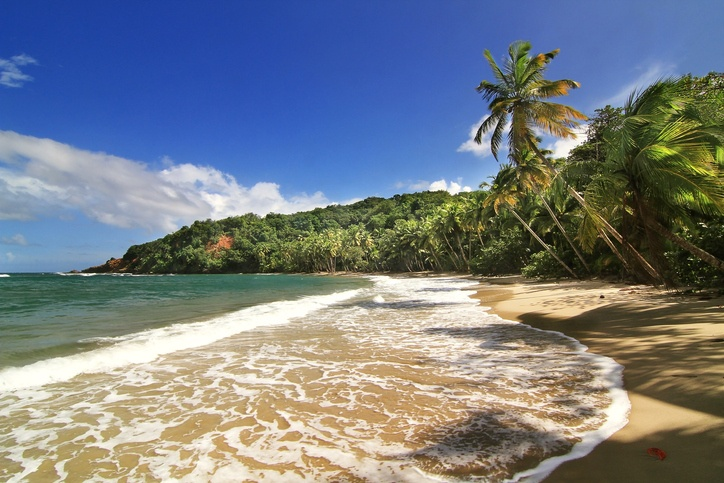 dominica beach palm tree Caribbean sand