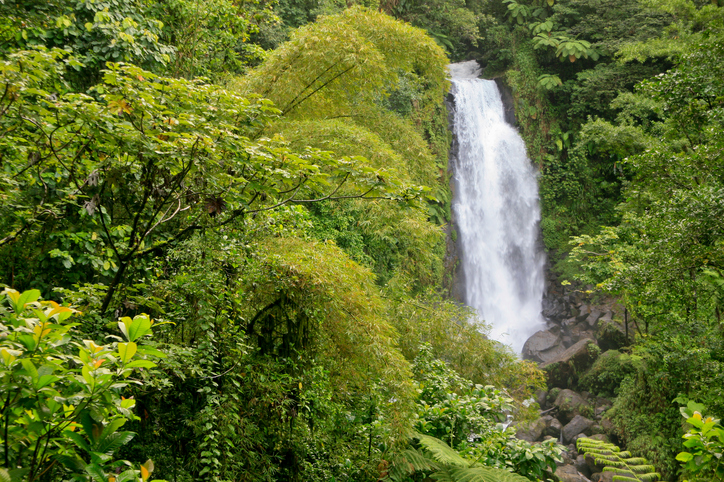 trafalgar waterfall dominica park national morne trois