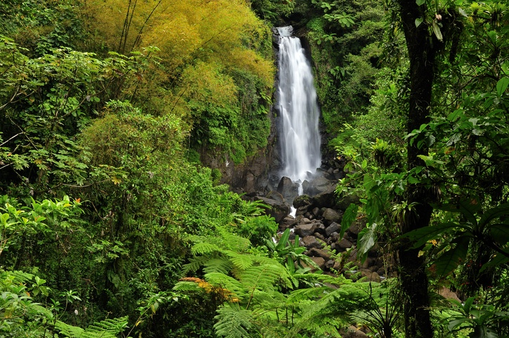 dominica waterfall trafalgar nature wilds caribbean