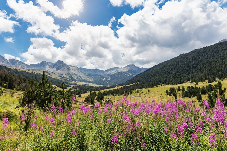 andorra field nature flowers landscape
