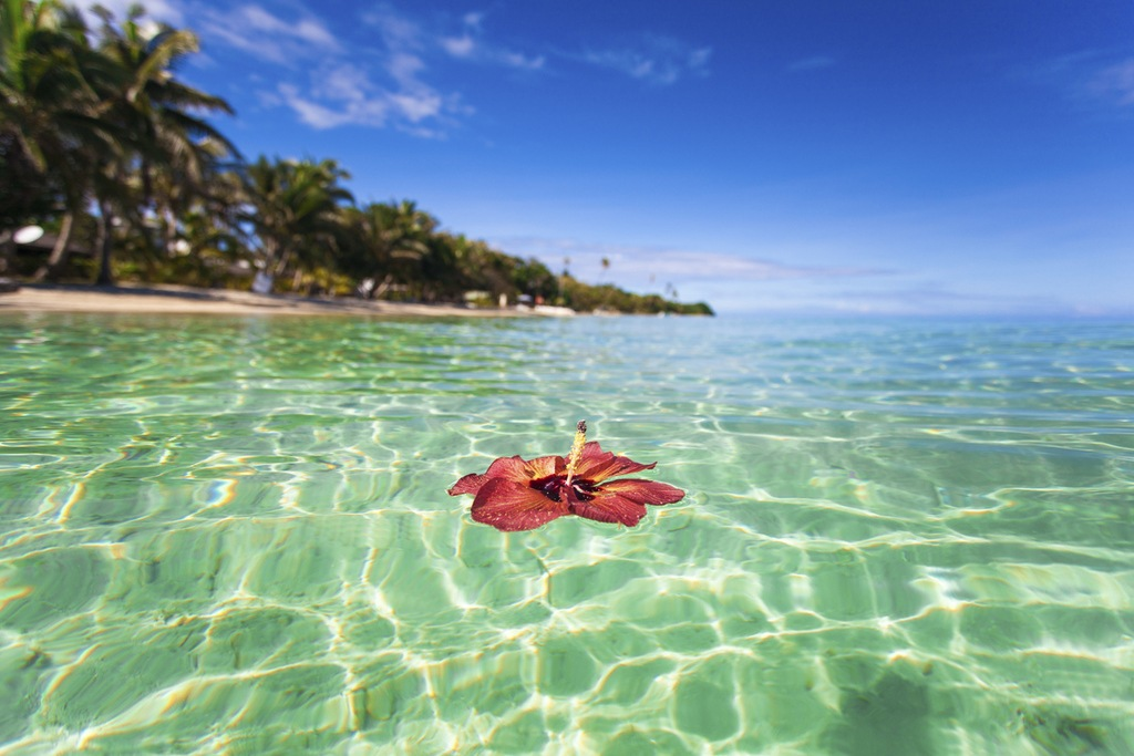 fiji travel water lily clear tropical sea