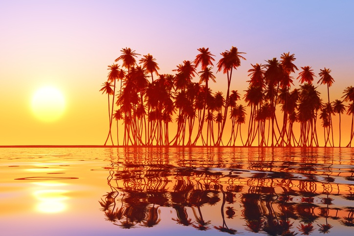 fiji sunset palm trees water ocean island pacific