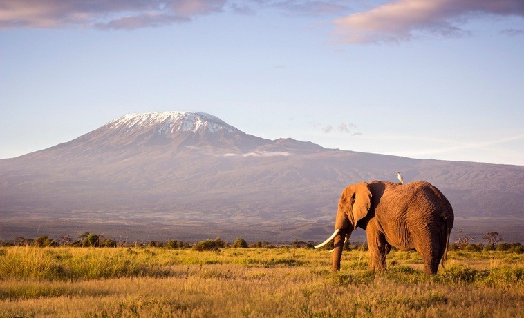 amboseli kilamanjaro elephant mountain walking plain