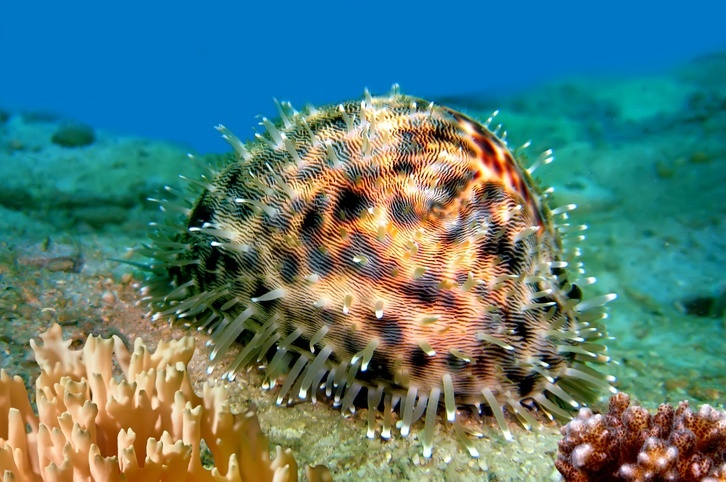 austral islands french polynesia sea life creatures reef