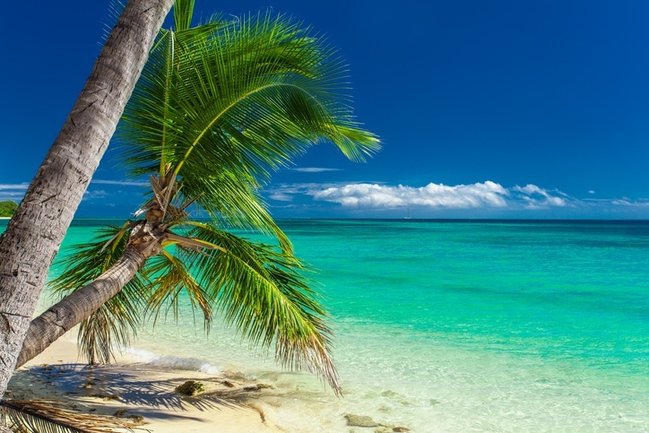 french polynesia palm tree sandy beach ocean