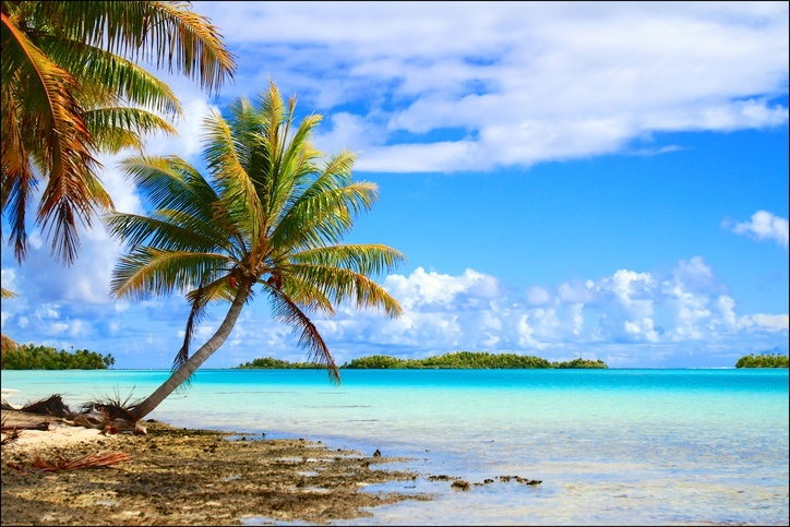 rangiroa tuamotus island french polynesia palm tree beach pacific ocean