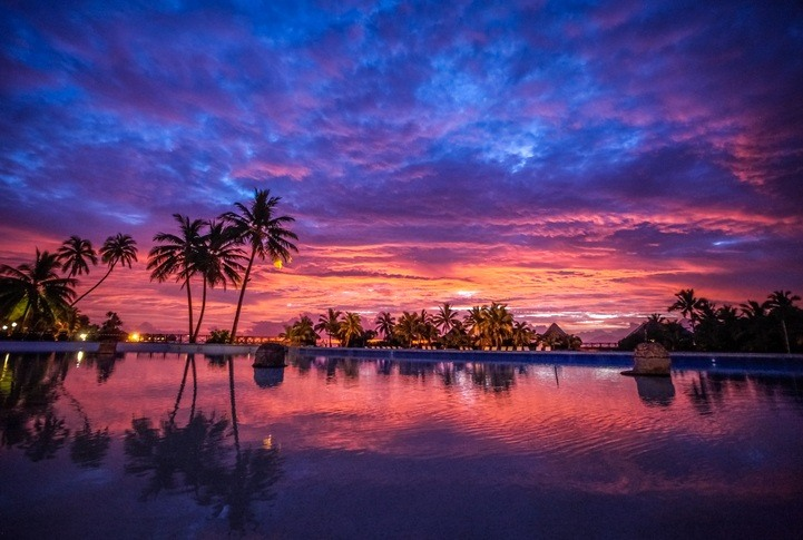 french polynesia sunset palm trees