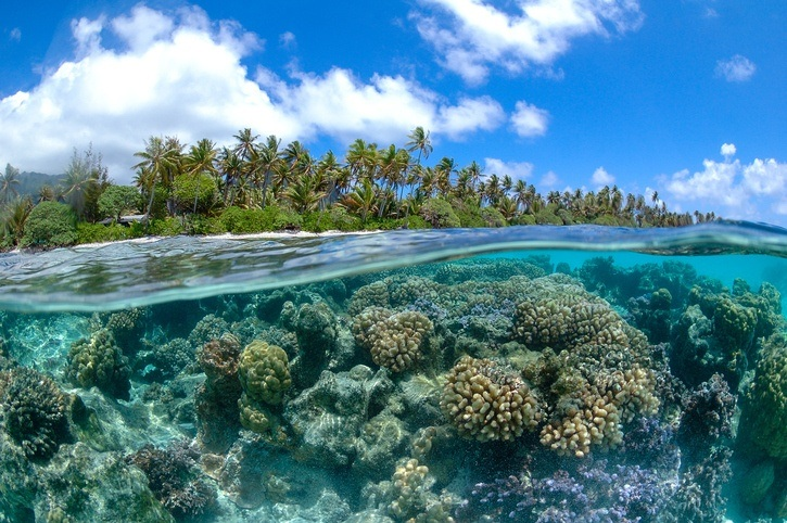 french polynesia underwater coral reef pacific