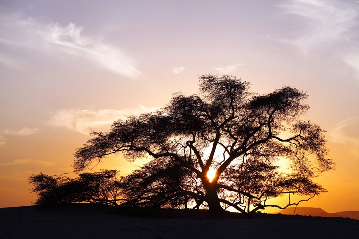 tree of life bahrain desert sunset night garden of eden