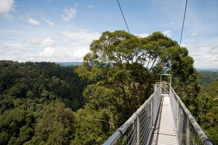 Ulu Temburong national park canopy walk brunei