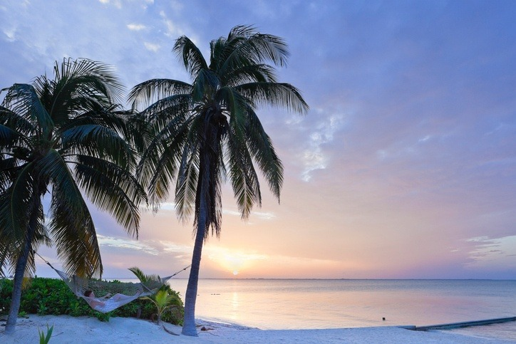 cayman island sunset palm trees caribbean beach