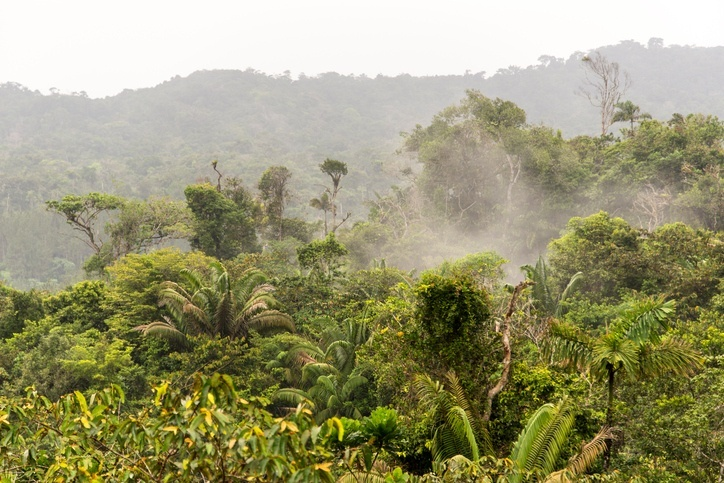 panama-forest