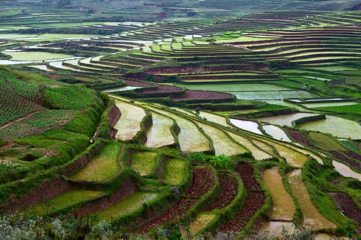 madagascar rice paddy fields terraced countryside irrigation