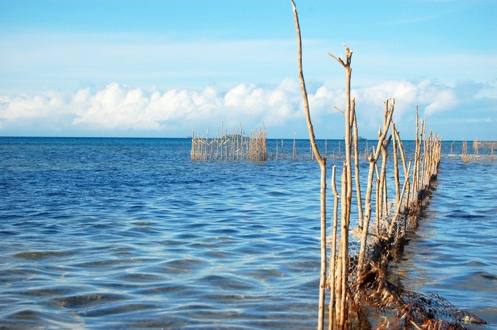 tonga fishing sticks ocean water sea work fence