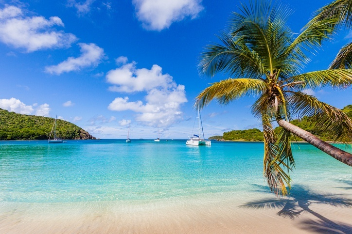 saint vincent grenadines palm tree beach water caribbean