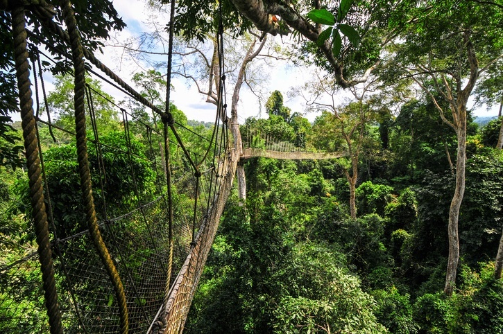 kakum national park ghana canopy bridge rope trees forest