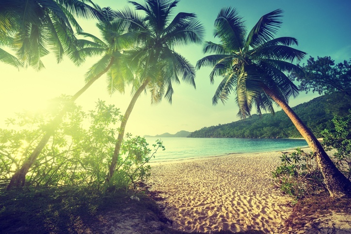 seychelles light sun palm trees beach ocean sand