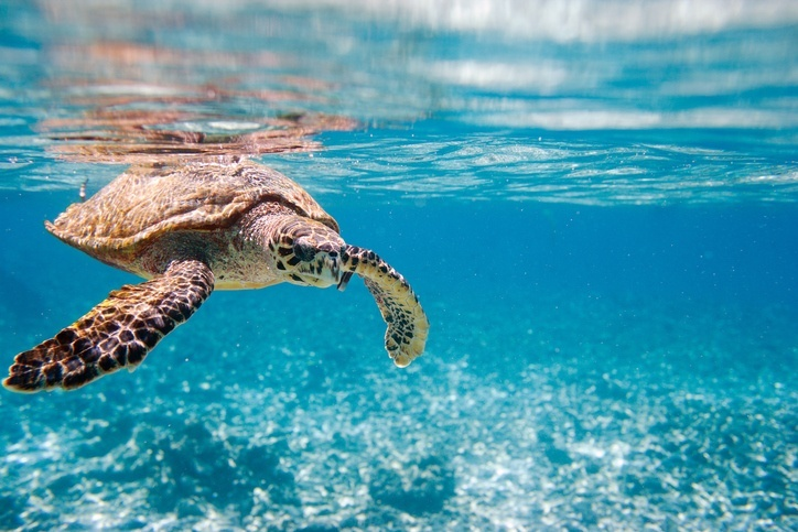 tortoise seychelles swimming underwater ocean life animal