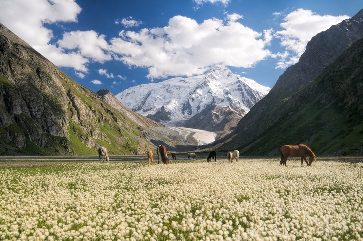 kyrgyzstan mountains grazing horses landscape field