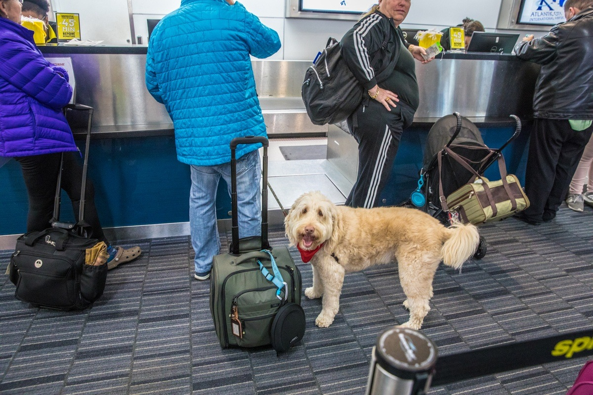 flying with pets airport dog